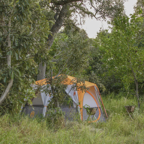 Mobile horseback safari in the Okavango Delta, Botswana. Bush camp tent.