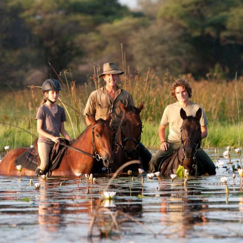 Mobile horseback safari in the Okavango Delta. Riding Holidays in Botswana. Horses swimming. Water lillies flowering.