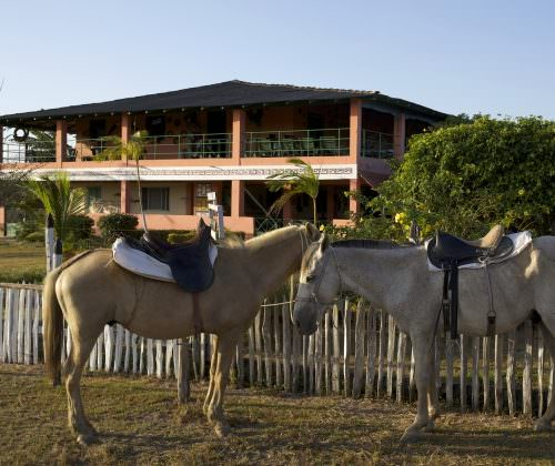 Riding Holidays in the Amazon Delta. Adventurous trips on horseback in Brazil. Horses relaxing in sun.