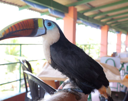 Riding Holidays in the Amazon Delta. Adventurous trips on horseback in Brazil. Toucan.