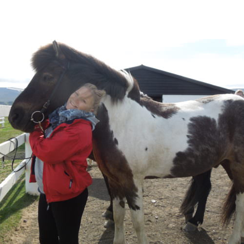 Iceland horse cuddles