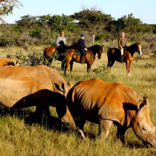 Rhino conservation is very important at Ant's