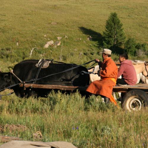Mongolia yak cart