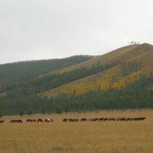 Mongolia Mongol Horse Trail