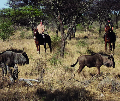 Riding with Wildebeest