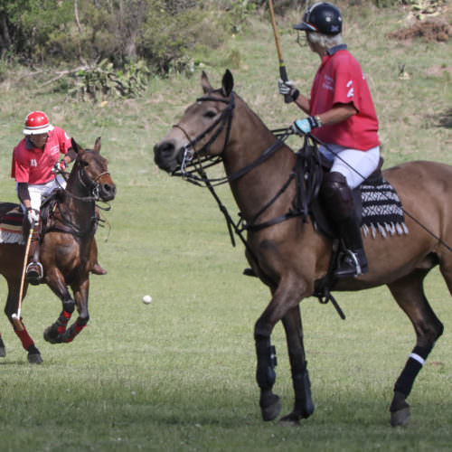 Argentina, country polo. Two ponies.