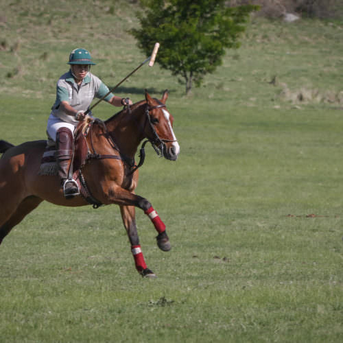 Polo at Los Potreros. Polo pony cantering. In The Saddle