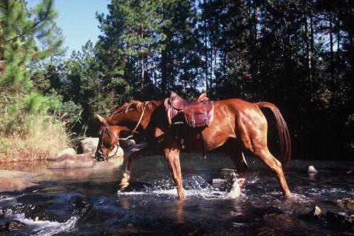 Riding holidays in Swaziland. Safaris in Africa. Horse splashing