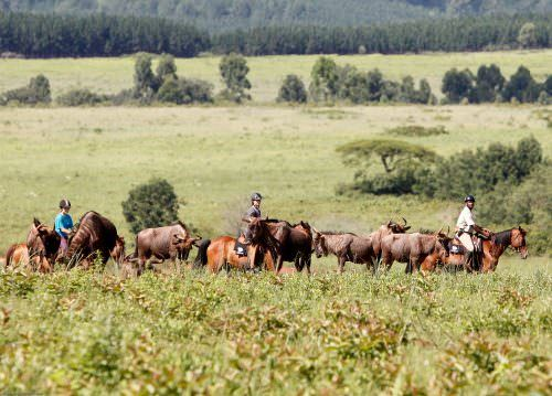 Riding holidays in Swaziland. Safaris in Africa. Horses and game.