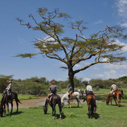 Watering hole in Tanzania