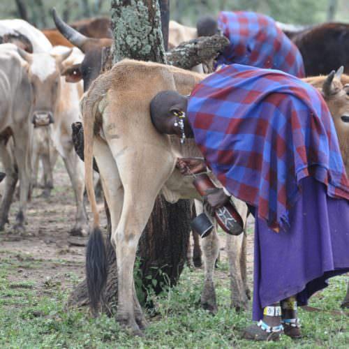 Maasai herder in Tanzania