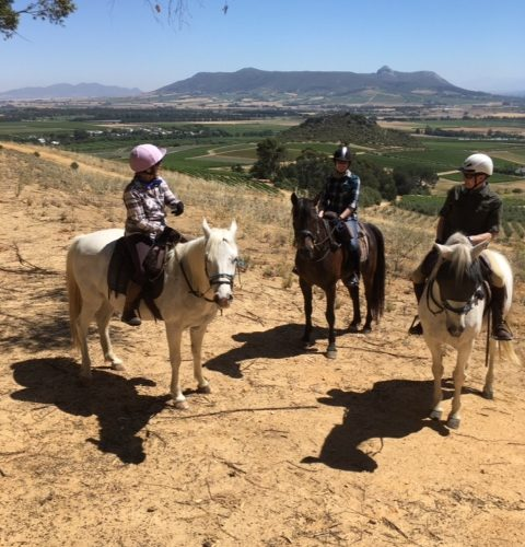Riding in the Cape Winelands