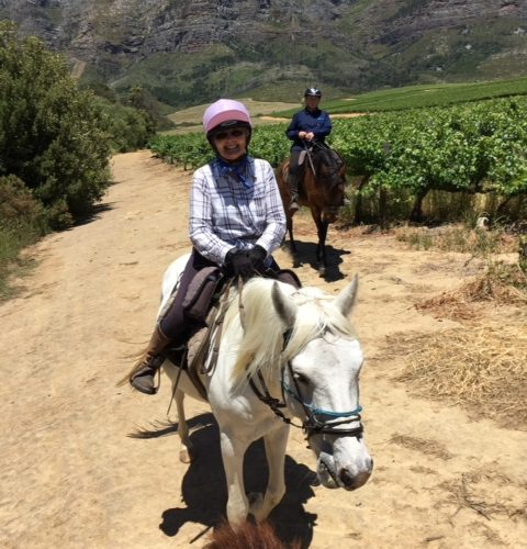 Horses and Cape Winelands