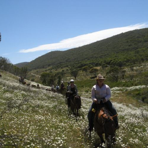 Views of Kosciuszko National Park. Horse riding through a meadow of flowers