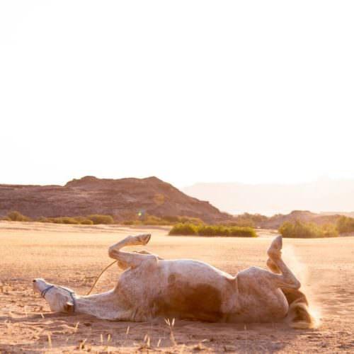 Rolling in desert