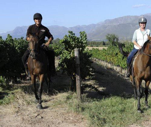 sunny horse riding