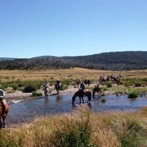 Views of Kosciuszko National Park . Horses drinking from the stream