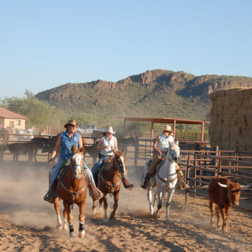 Team penning. Learning cowboy skills on a western ranch holiday with In The Saddle.
