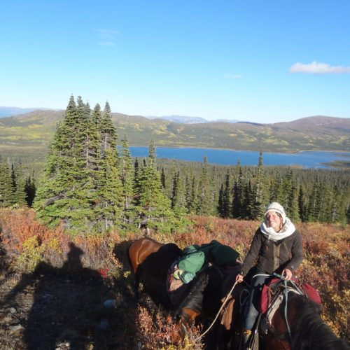 Riding holiday expedition in the Yukon, Canada. Horses on the trail