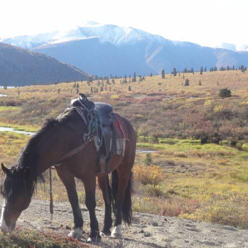 Yukon - trail