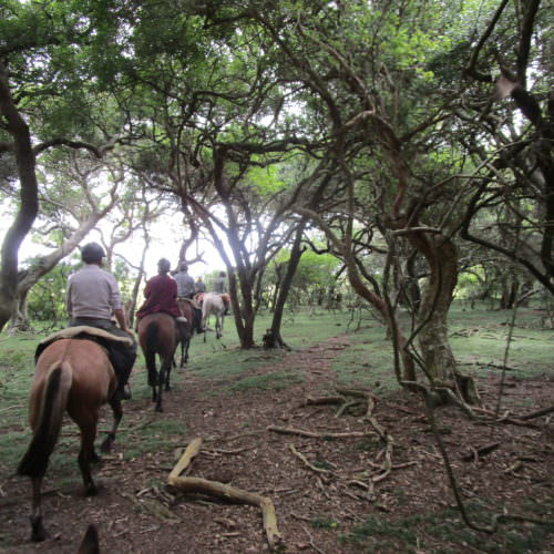 Uruguay woods. Beach riding holidays in Uruguay with In The Saddle