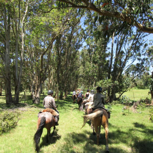 Uruguay Jose Ignacio. Beach riding holidays in Uruguay with In The Saddle.