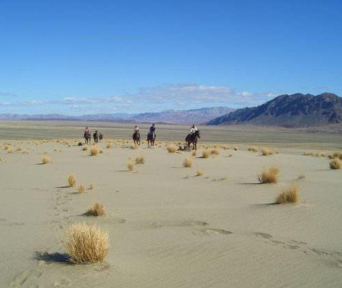 horses across namib