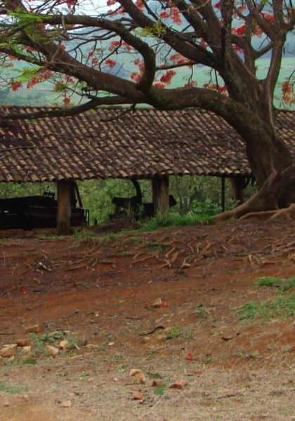 Riding the Coffee Trail - Brazil