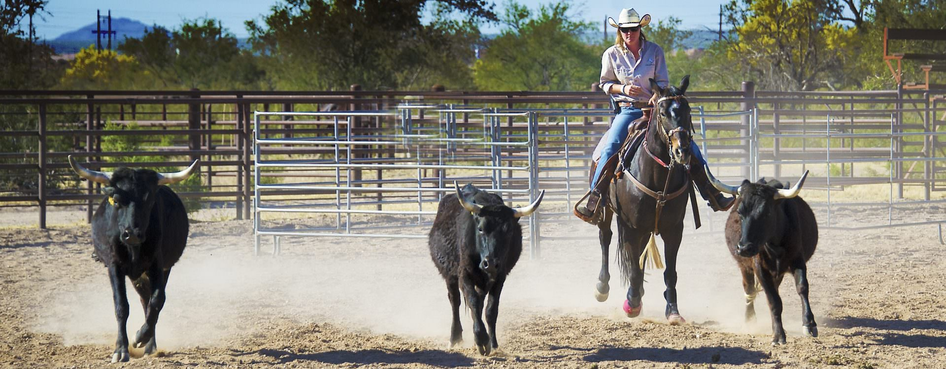 Herding steers at White Stallion Ranch - Arizona