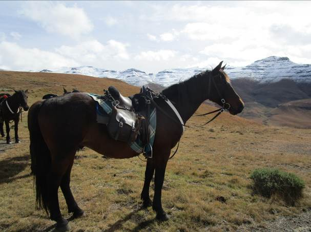 Horses in Lesotho