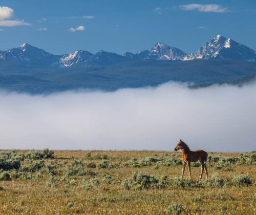 foal in the misty mountains of montana