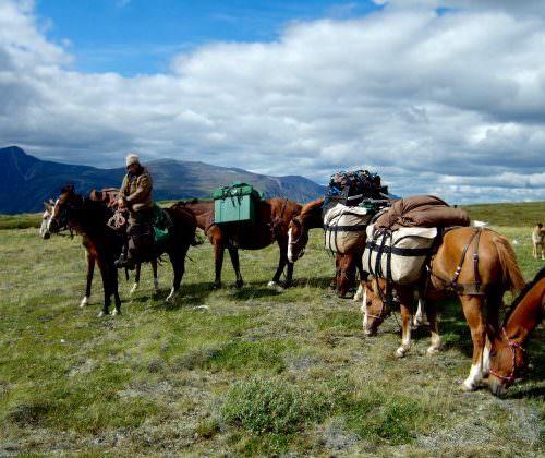 Yukon - pack horses