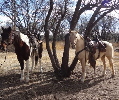 Two horses tied up at a lunch stop at Fairbank Ghost Town.