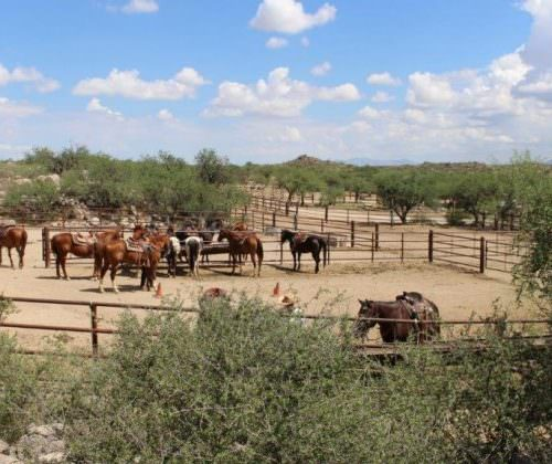 Corral at Tombstone Monument Ranch