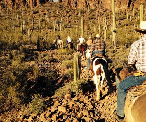 Guest - Gaynor Somerville. Horse riding in the desert, through cactus
