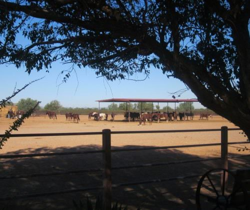 Guest - Vicky Sudall. horses grazing in Arizona