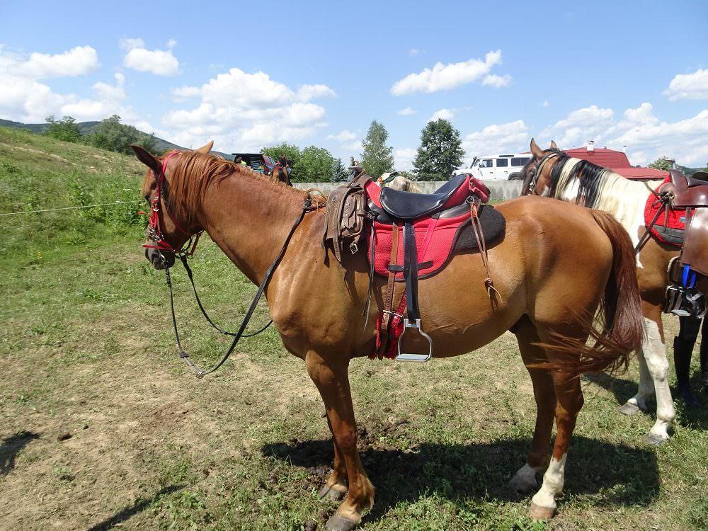 endurance riding tack in Bulgaria