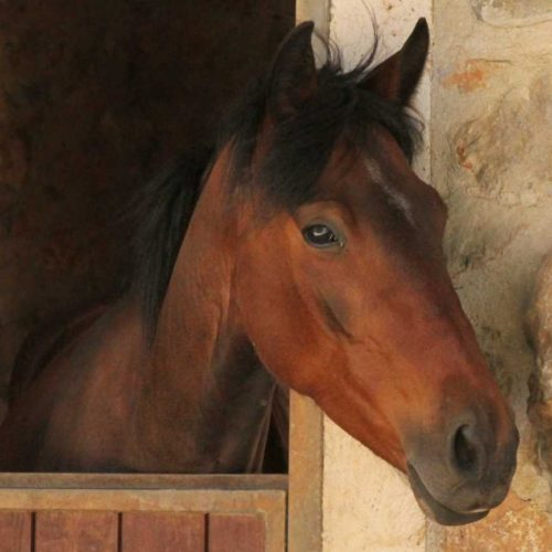 Crete - horse