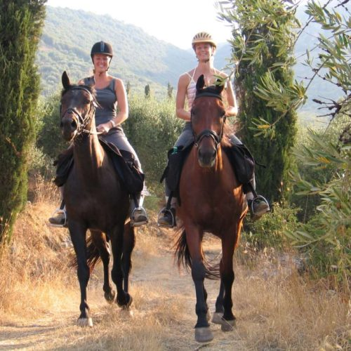 Trail riding holiday in Crete. Lassithi Plateau. Horses