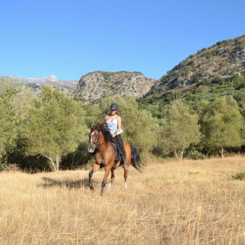 Trail riding holiday in Crete. Lassithi Plateau. Horse cantering