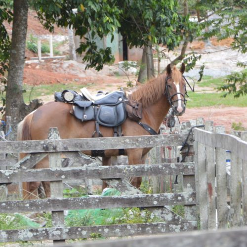 Trail riding holidays in Brazil. Horses in the rainforest. Saddles.