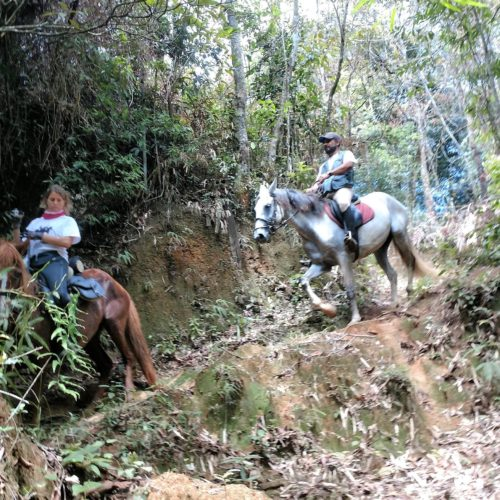 Riding in Brazil. Trail riding holidays in Brazil. Horses in the rainforest.