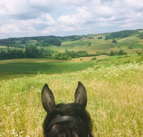 horse riding in Croatia, Old Mulberry