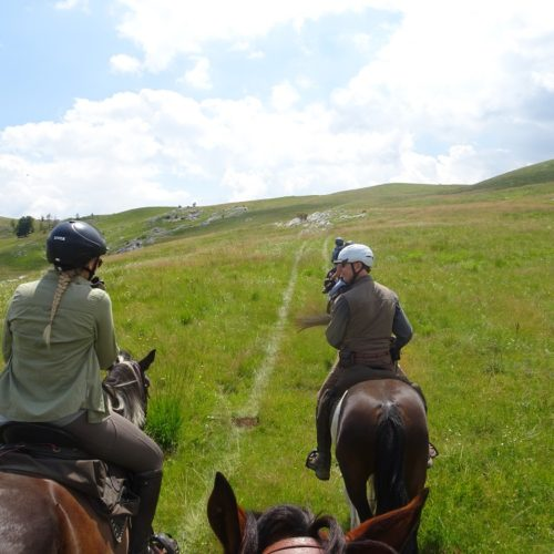 Lush meadows are perfect terrain for riding