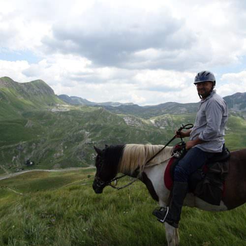 Coloured horse trail riding
