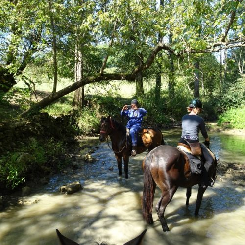 Riding horses in a stream