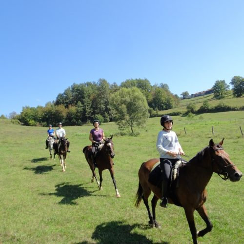 Fast paced, centre-based riding holiday in Croatia.