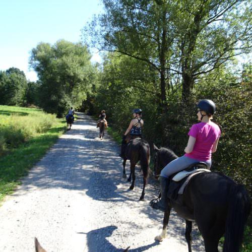 Horses in Croatia