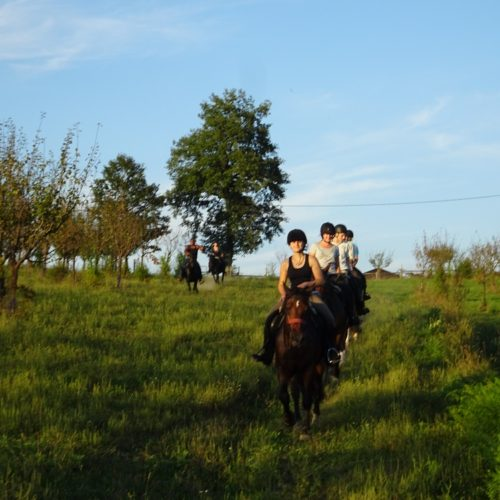 Horse riding in Croatia