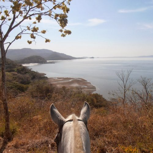 Horse riding with great views
